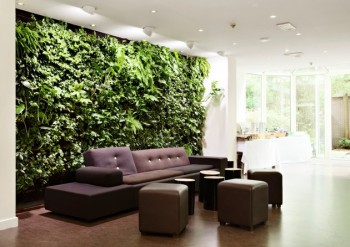 Garden Ideas: 20 Room Ideas for an Interior Garden