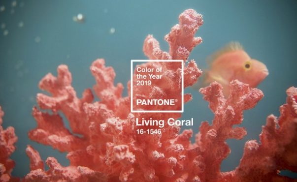 Living Coral - Meet Pantone's 2019 Colour of the Year 2019 Colour of the Year Living Coral – Meet Pantone's 2019 Colour of the Year Living Coral Meet Pantones 2019 Colour of the Year 5 603x370
